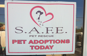 Featured Story S.A.F.E. Pet Rescue
